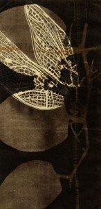 Megan Klazura, relief print