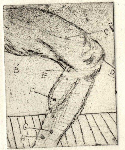 Amelia's Print