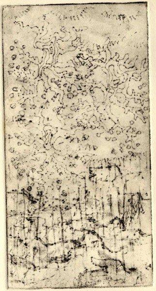 Vanessa's Print